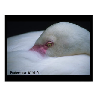 Schützen Sie unsere Tier-Flamingo-Postkarte