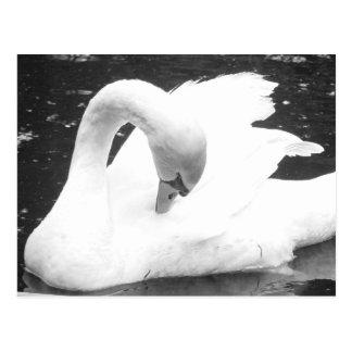 Schwan des Sees--Schwarzweiss Postkarte