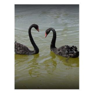 Schwäne in der Liebe Postkarte