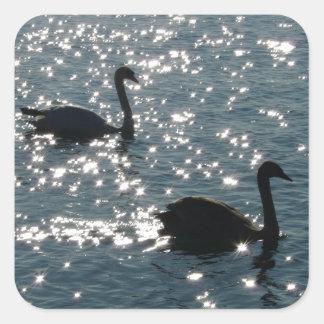 Schwanpaare im Sonnenlicht Quadratischer Aufkleber