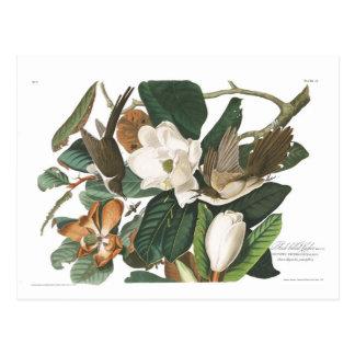 Schwarz-berechneter Kuckuck Audubon Platten-32 Postkarte