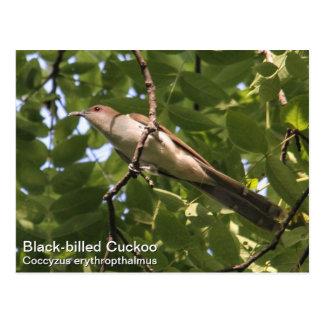 Schwarz-berechneter Kuckuck Postkarte