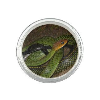 Schwarz-eingestelltes Ratsnake oder grüne Foto Ring