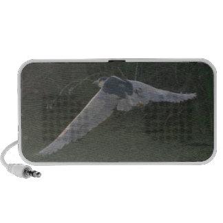 Schwarz-Gekrönte Nacht-Reiher Lautsprecher