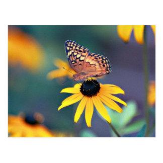 schwarz-mit Augen Susan mit Schmetterling 2 Postkarte
