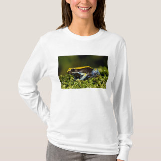 Schwarz-ohriges Mantella, Mantella expectata, T-Shirt