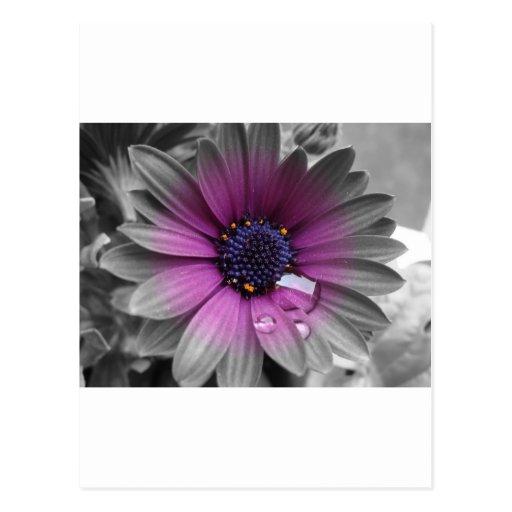 Schwarz weiß und Farbe sehr schöne Pflanze Postkarten