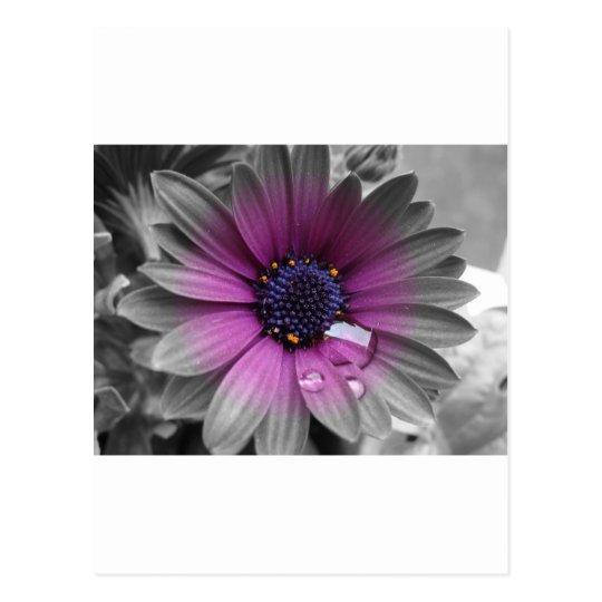 Schwarz weiß und Farbe sehr schöne Pflanze Postkarte