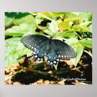Schwarz-weiße Frack-Schmetterlings-Foto-Plakate Poster