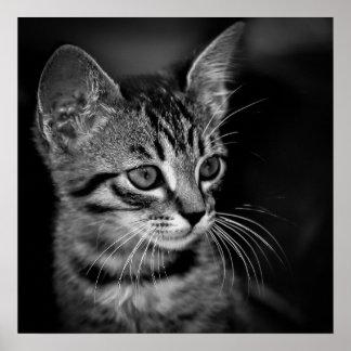 Schwarz-weiße Katze c des SCHWARZ-WEISSEN Posterdruck