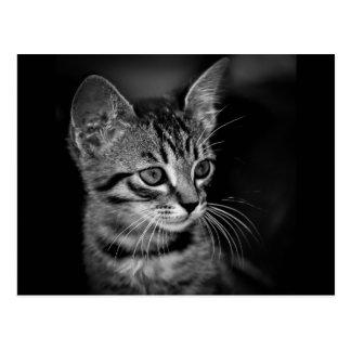 Schwarz-weiße Katze c des SCHWARZ-WEISSEN Postkarte