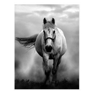 Schwarz-weiße laufende Pferdefreiheit Postkarte