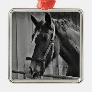 Schwarz-weißes Pferd - Tierphotographie-Kunst Silbernes Ornament