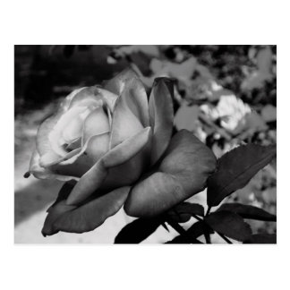 Schwarze Blume Postkarte