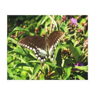 Schwarze Frack-Schmetterlings-Natur-Fotografie Leinwanddruck