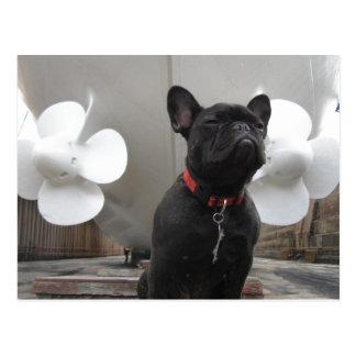 Schwarze französische Bulldogge Postkarte