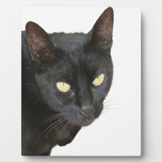 Schwarze Katze abgeschieden Fotoplatte