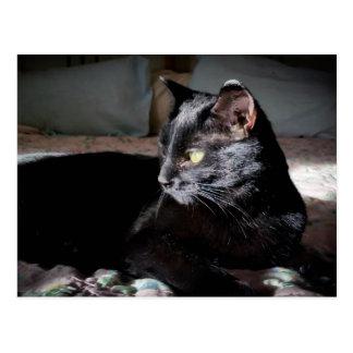 Schwarze Katze auf einer Betpostkarte Postkarte