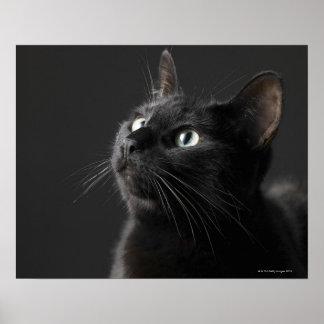 Schwarze Katze gegen schwarzen Hintergrund Nahauf Plakat