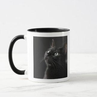 Schwarze Katze gegen schwarzen Hintergrund, Tasse