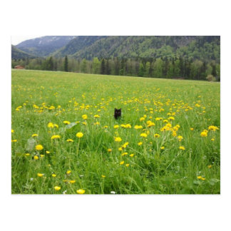 Schwarze Katze in der Wiese - Postkarte