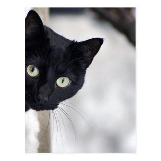 Schwarze Katze Postkarte