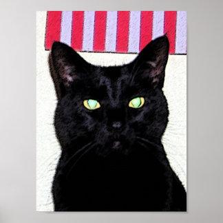 Schwarze Katze/rotes weißes Blau Poster