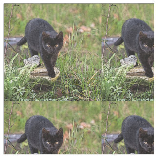Schwarze Katze Stoff