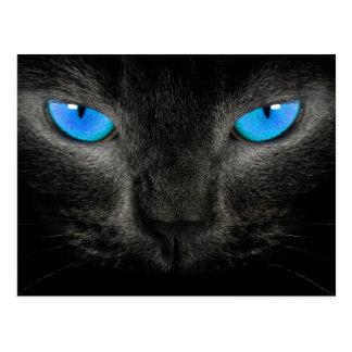 Schwarze Katzen-blaue Augen-Nahaufnahme Postkarten