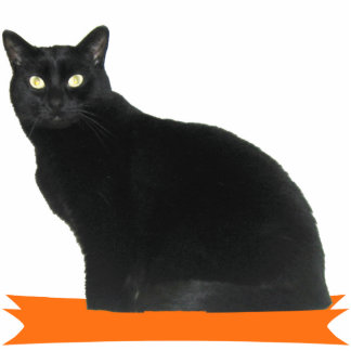 Schwarze Katzen-Halloween-Party-Foto-Skulptur