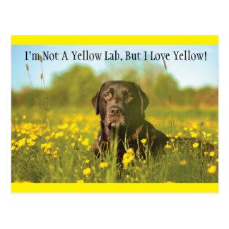 Schwarze Labrador-Hundepostkarte Postkarte
