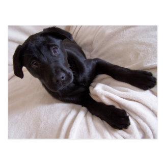 Schwarze Labrador-Postkarte Postkarte