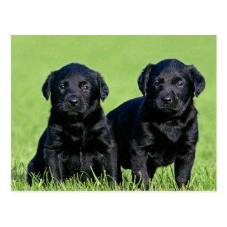 Schwarze Labrador retriever-Hündchen-Postkarte Postkarte