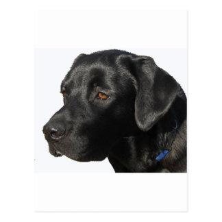 Schwarze Labrador-Schönheit Postkarte