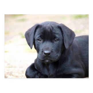 Schwarze Labrador-Welpen-Postkarte Postkarte