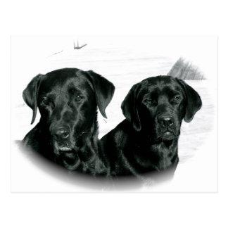 Schwarze Labradore Postkarte