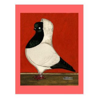 Schwarze Nonnen-Taube Postkarten