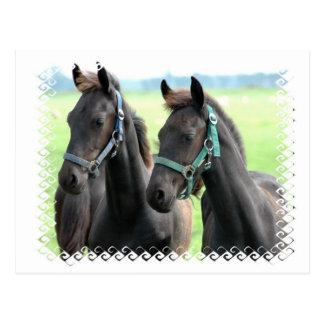 Schwarze Pferdeentwurfs-Postkarte Postkarte