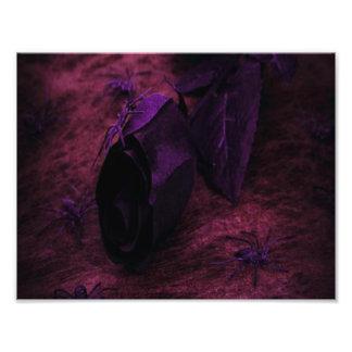 Schwarze Rose Fotodruck