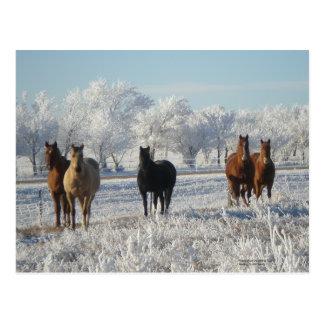 Schwarze Schaf-Pferd Postkarte