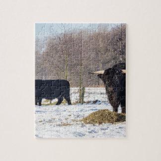 Schwarze schottische Hochländer im Winterschnee Puzzle