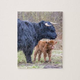 Schwarze schottische Hochländermutterkuh mit Puzzle