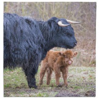 Schwarze schottische Hochländermutterkuh mit Stoffserviette
