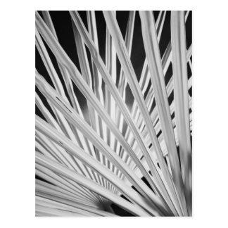 Schwarze u. weiße Ansicht der Palmewedel Postkarte