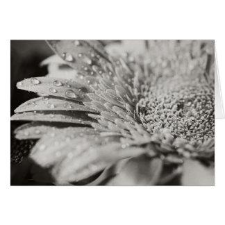 Schwarze u. weiße Blumen-u. Karte