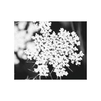 Schwarze u. weiße Blumenwand-Kunst - Spitze der Gespannte Galerie Drucke