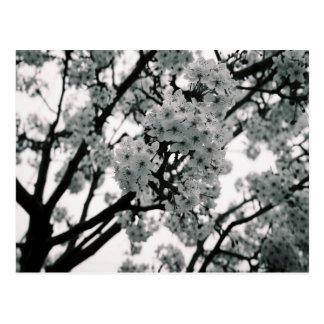 Schwarze u. weiße Blüte Postkarte