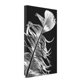 Schwarze u. weiße Fotografie-Feder-Kunst Leinwanddruck