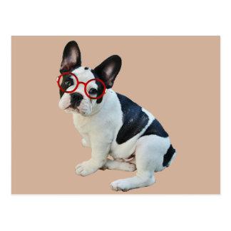 Schwarze u. weiße französische Bulldogge, die rote Postkarte