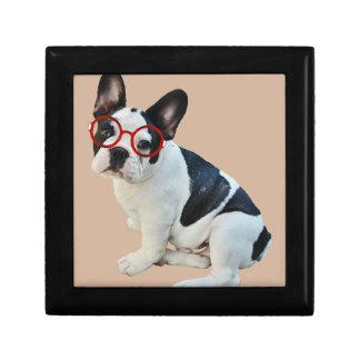 Schwarze u. weiße französische Bulldogge, die rote Schmuckschachtel